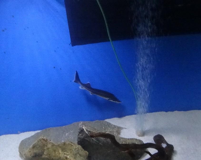 Täytettyjen eläinten lisäksi paikalla oli akvaariossa kaloja.